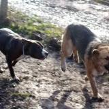 kutya-orokbefogadas-hajduszoboszlo-2017-november-107