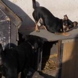 kutya-orokbefogadas-hajduszoboszlo-2017-november-109