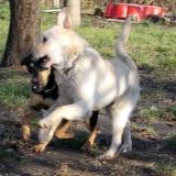 kutya-orokbefogadas-hajduszoboszlo-2017-november-110