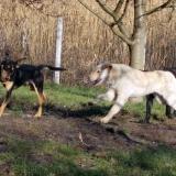 kutya-orokbefogadas-hajduszoboszlo-2017-november-113