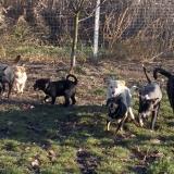 kutya-orokbefogadas-hajduszoboszlo-2017-november-117