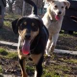 kutya-orokbefogadas-hajduszoboszlo-2017-november-123