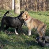 kutya-orokbefogadas-hajduszoboszlo-2017-november-125