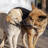 kutya-orokbefogadas-hajduszoboszlo-2017-november-13
