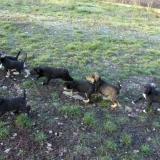 kutya-orokbefogadas-hajduszoboszlo-2017-november-130