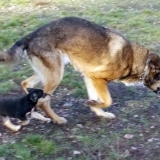 kutya-orokbefogadas-hajduszoboszlo-2017-november-141
