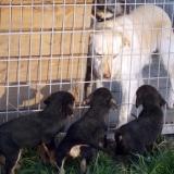 kutya-orokbefogadas-hajduszoboszlo-2017-november-149