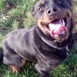 kutya-orokbefogadas-hajduszoboszlo-2017-november-157