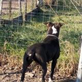 kutya-orokbefogadas-hajduszoboszlo-2017-november-17