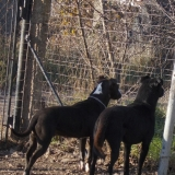 kutya-orokbefogadas-hajduszoboszlo-2017-november-27
