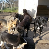 kutya-orokbefogadas-hajduszoboszlo-2017-november-29
