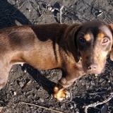 kutya-orokbefogadas-hajduszoboszlo-2017-november-3