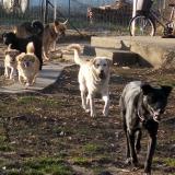 kutya-orokbefogadas-hajduszoboszlo-2017-november-35