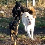 kutya-orokbefogadas-hajduszoboszlo-2017-november-40