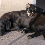 kutya-orokbefogadas-hajduszoboszlo-2017-november-42