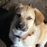 kutya-orokbefogadas-hajduszoboszlo-2017-november-47