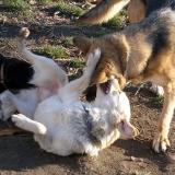 kutya-orokbefogadas-hajduszoboszlo-2017-november-5