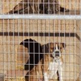 kutya-orokbefogadas-hajduszoboszlo-2017-november-56