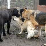 kutya-orokbefogadas-hajduszoboszlo-2017-november-61