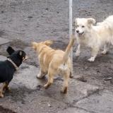 kutya-orokbefogadas-hajduszoboszlo-2017-november-63