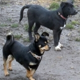 kutya-orokbefogadas-hajduszoboszlo-2017-november-65