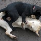 kutya-orokbefogadas-hajduszoboszlo-2017-november-69