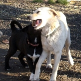 kutya-orokbefogadas-hajduszoboszlo-2017-november-7