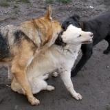 kutya-orokbefogadas-hajduszoboszlo-2017-november-72