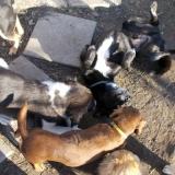 kutya-orokbefogadas-hajduszoboszlo-2017-november-8