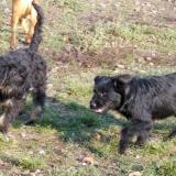 kutya-orokbefogadas-hajduszoboszlo-2017-november-88