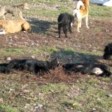 kutya-orokbefogadas-hajduszoboszlo-2017-november-90