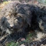 kutya-orokbefogadas-hajduszoboszlo-2017-november-91