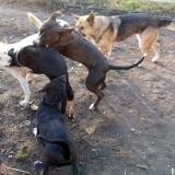 kutya-orokbefogadas-hajduszoboszlo-2017-november-98