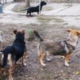 menhely-kutya-orokbefogadas-hajduszoszlo-2018-november-2