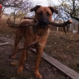 menhely-kutya-orokbefogadas-hajduszoszlo-2018-november-20
