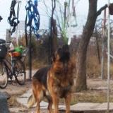 menhely-kutya-orokbefogadas-hajduszoszlo-2018-november-5