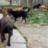 kutya-menhely-hajduszoboszlo-kutya-orokbefogadas-2018-marcius-27