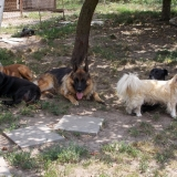 menhely-kutya-orokbefogadas-hajduszoszlo-2018-augusztus-1