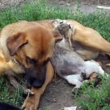 menhely-kutya-orokbefogadas-hajduszoszlo-2018-augusztus-14