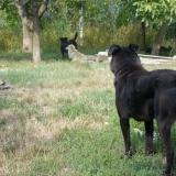 menhely-kutya-orokbefogadas-hajduszoszlo-2018-augusztus-17
