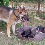 menhely-kutya-orokbefogadas-hajduszoszlo-2018-augusztus-32