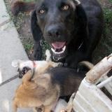 menhely-kutya-orokbefogadas-hajduszoszlo-2018-augusztus-4