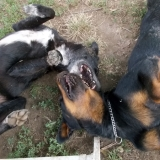 menhely-kutya-orokbefogadas-hajduszoszlo-2018-augusztus-8