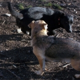 kutya-menhely-hajdú-bihar-hajdúszoboszló-kutyaorokbefogadas-2018.december-11