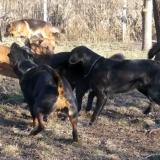 kutya-menhely-hajdú-bihar-hajdúszoboszló-kutyaorokbefogadas-2018.december-19