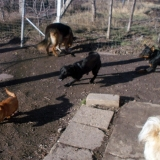 kutya-menhely-hajdú-bihar-hajdúszoboszló-kutyaorokbefogadas-2018.december-2