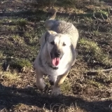 kutya-menhely-hajdú-bihar-hajdúszoboszló-kutyaorokbefogadas-2018.december-20