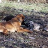 kutya-menhely-hajdú-bihar-hajdúszoboszló-kutyaorokbefogadas-2018.december-21