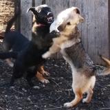 kutya-menhely-hajdú-bihar-hajdúszoboszló-kutyaorokbefogadas-2018.december-22