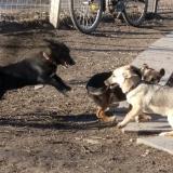 kutya-menhely-hajdú-bihar-hajdúszoboszló-kutyaorokbefogadas-2018.december-23